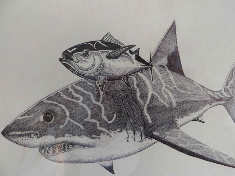 shark by Doug Dvorak-008 - Copy.jpg
