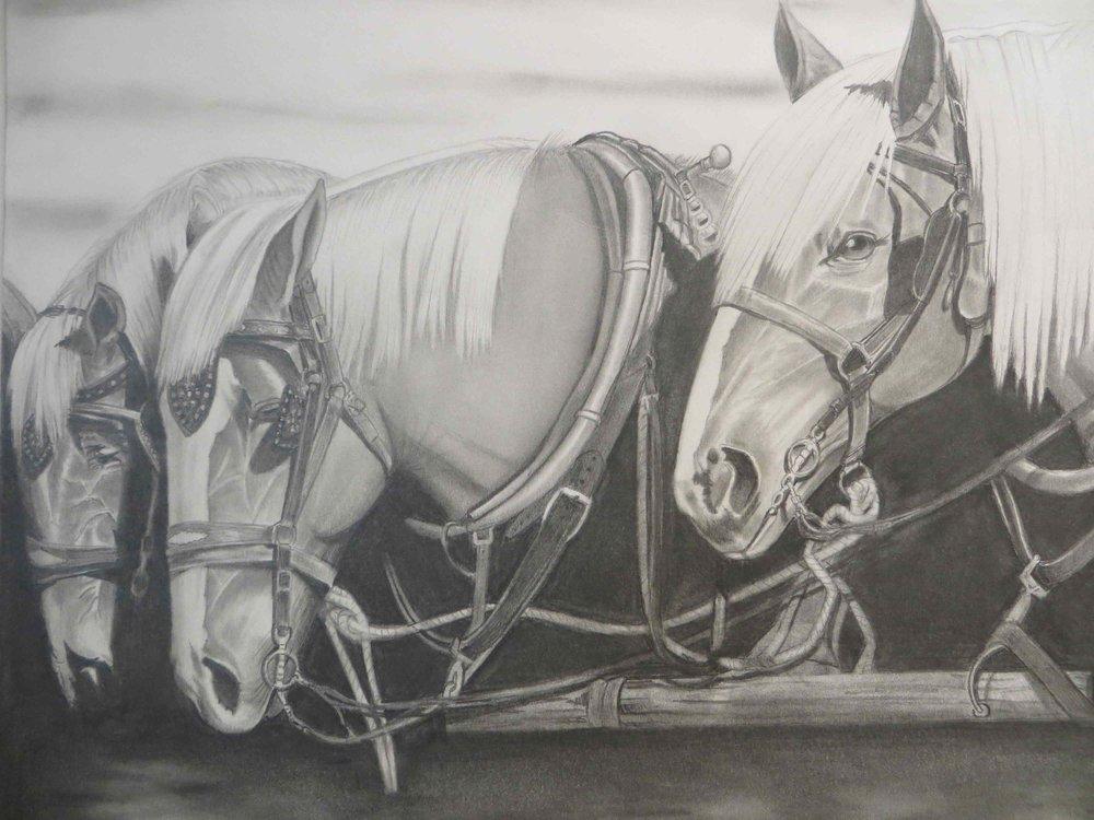 Three horses pencil drawing -002.jpg