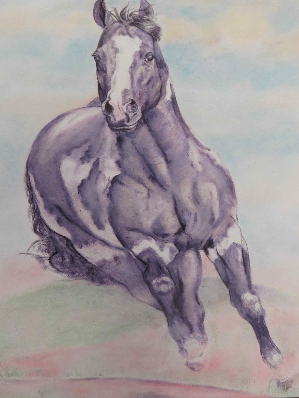 Horse painting watercolor by Whammo Sammo Texas-004 - Copy.jpg