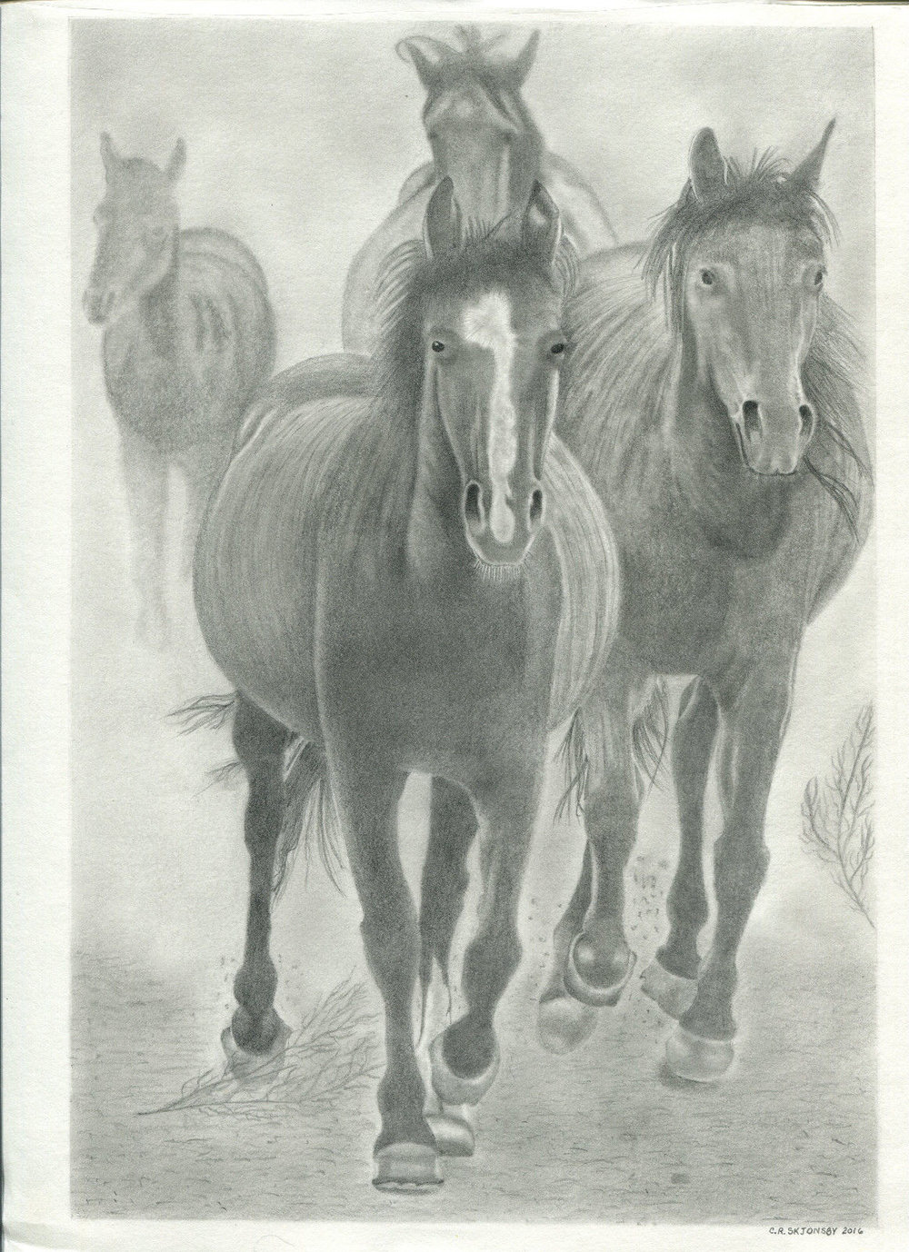 horses pencil drawing by Clare Skjonsby Oakdale, La..jpg