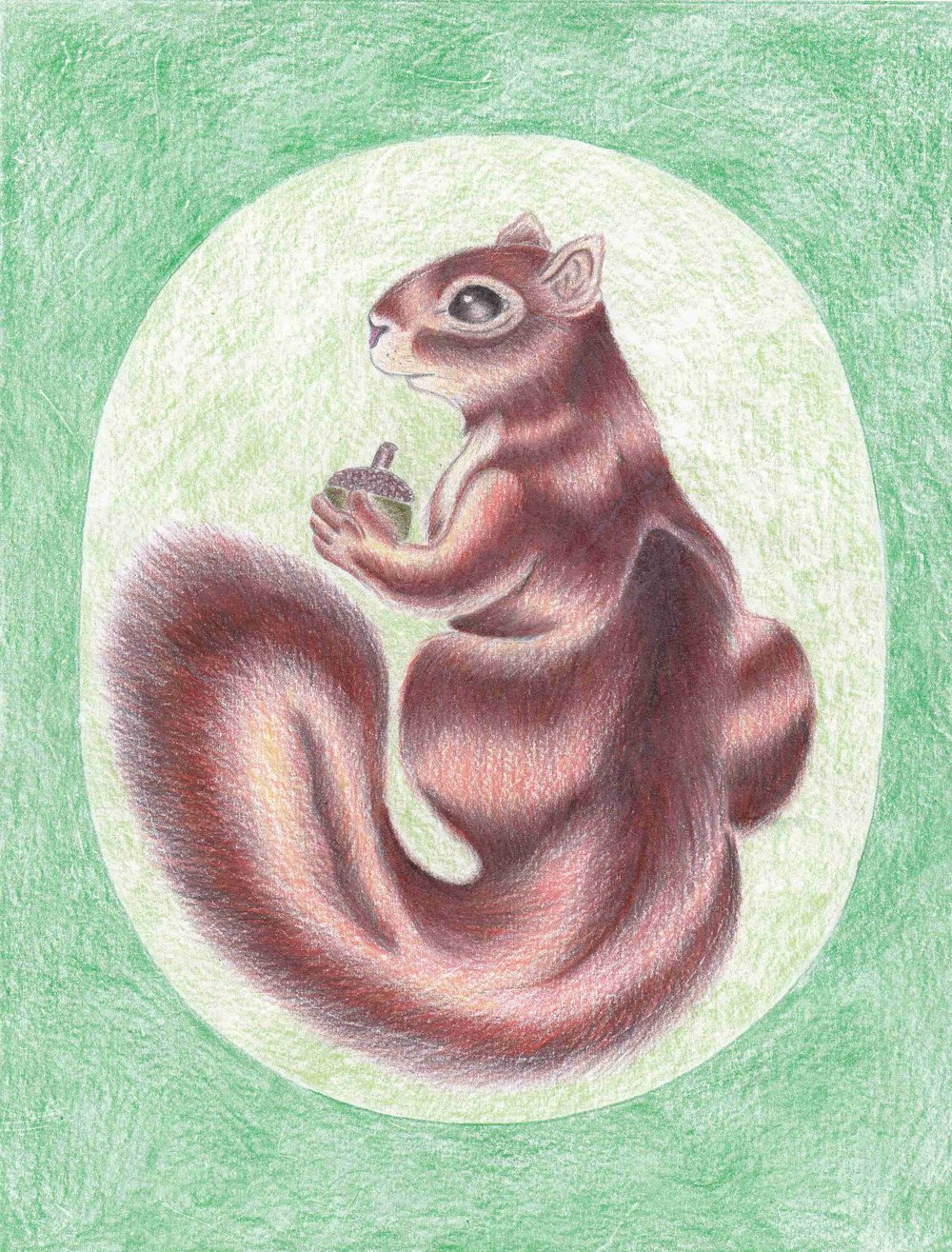 squirrel drawing by William J. Cumber-IMG_20180624_0001 - Copy.jpg