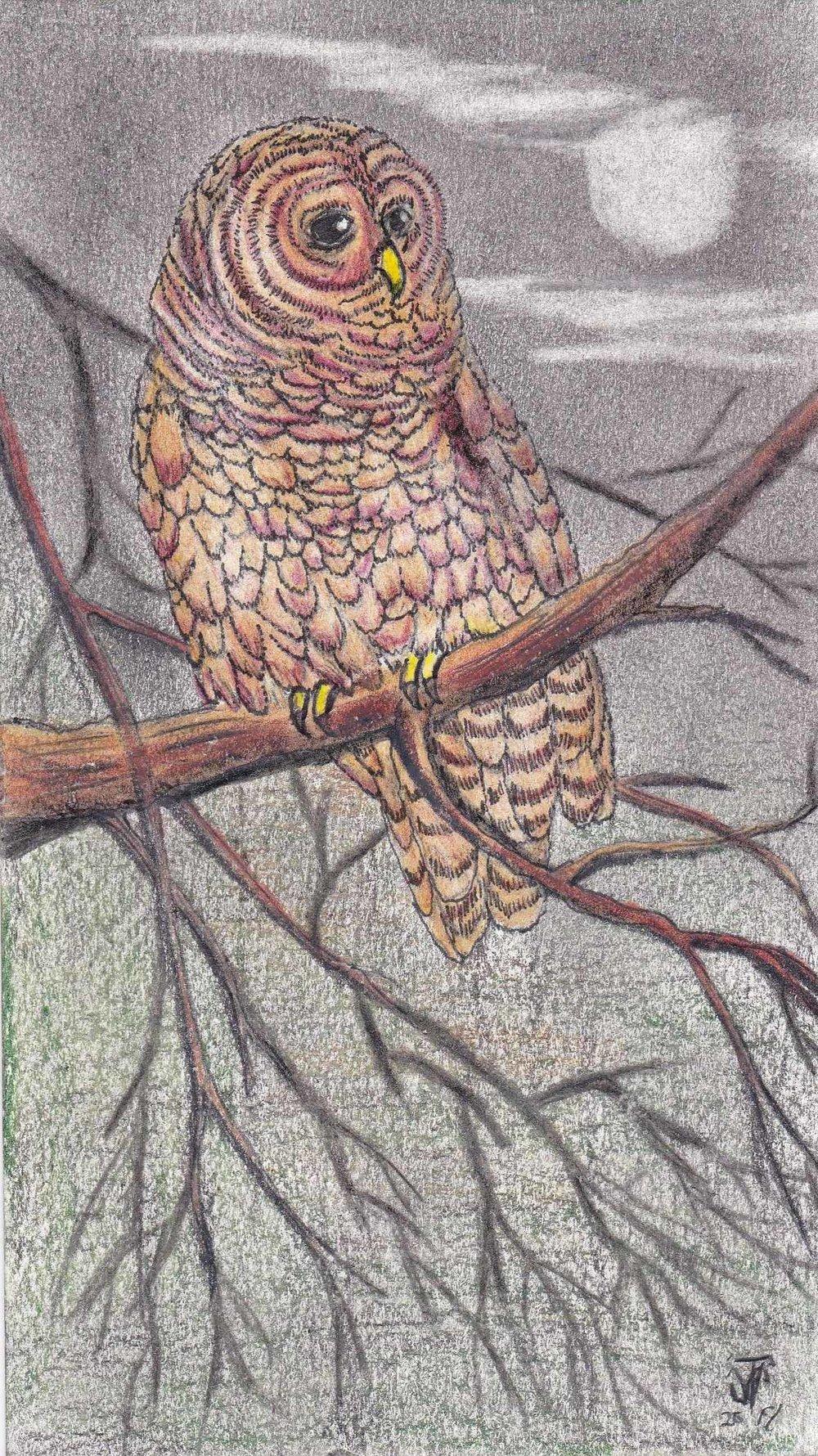 Owl drawign by John VanTielen 7 x4-IMG_20180528_0014 - Copy.jpg