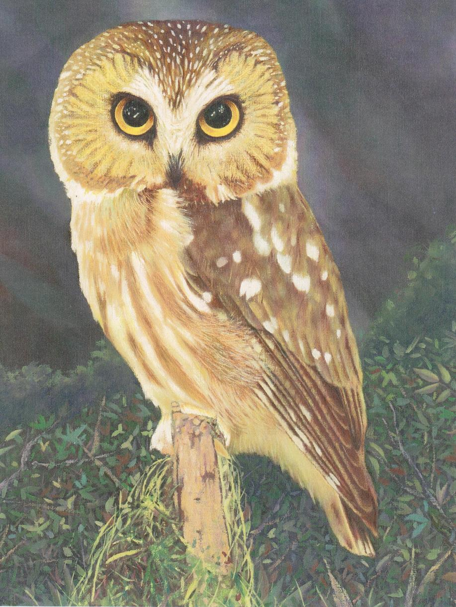 Owl Painting by Rudy G 001a.jpg