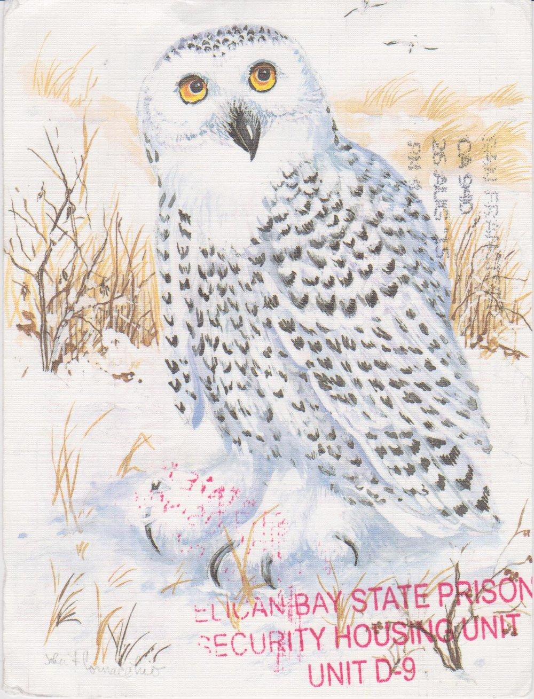 Snowy Owl by Tono 001.jpg