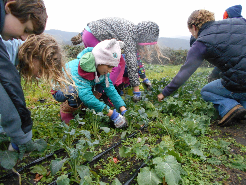 Harvesting at the Center for Sustainability