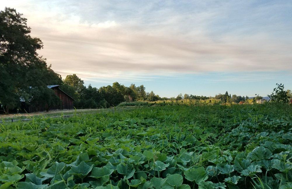 Dunbar Farms