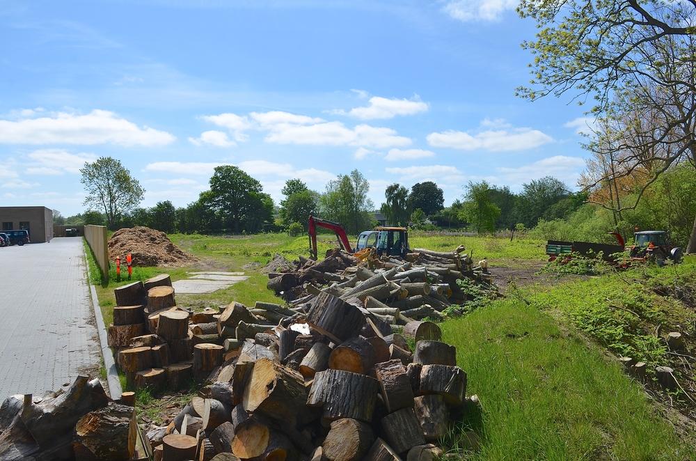 Flere maskiner har været i gang med at rydde arealet, og de store træstammer er skåret op til afhentning.   Foto: AOB