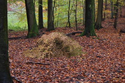 Haveaffald i skoven er ikke natur og pynter absolut ikke. Fotomanipulation: AOB