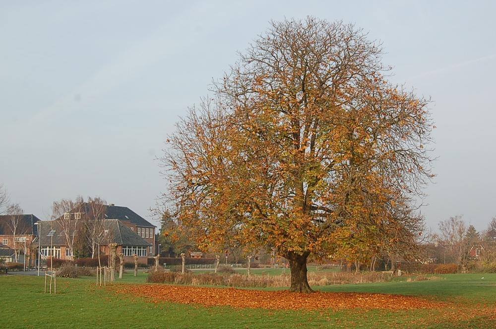 """""""De sidste blade falder langsomt ned og har dækket træets fod..."""" Foto: AOB"""