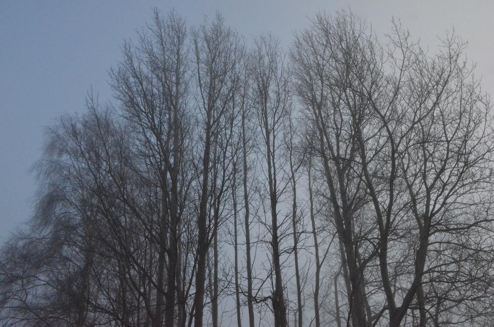 """""""De nøgne træer bevis er"""". Foto: AOB"""