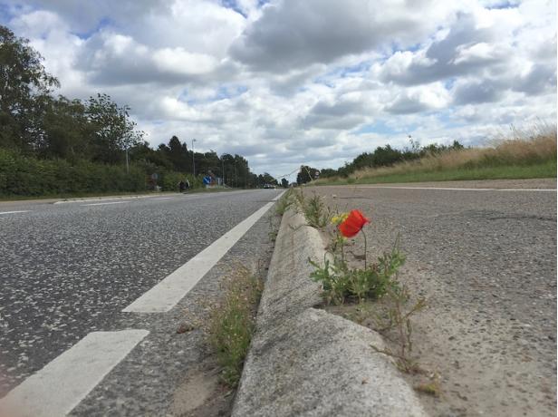 De 2/3 af Kongevejen, som ligger nord for Sortemosevej, må vente endnu nogle år med renovering: Foto: AOB