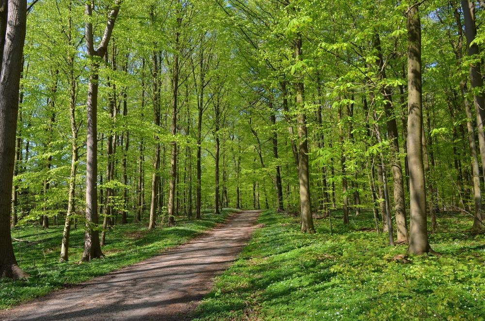 Når vi opholder os i grønne omgivelser, 'sker der noget afgørende'. Foto: AOB