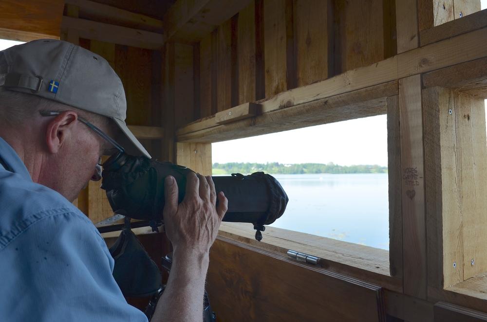 Fra fugleskjulet kan man på nært hold betragte fuglelivet. Foto. AOB