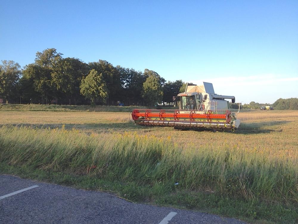 Med Ny Allerødgaard I baggrunden ses den store Claes mejetærsker med 7,5 meter bredt skærebord gnave sig igennem kornmarken.   Foto: Niels Kirkegaard