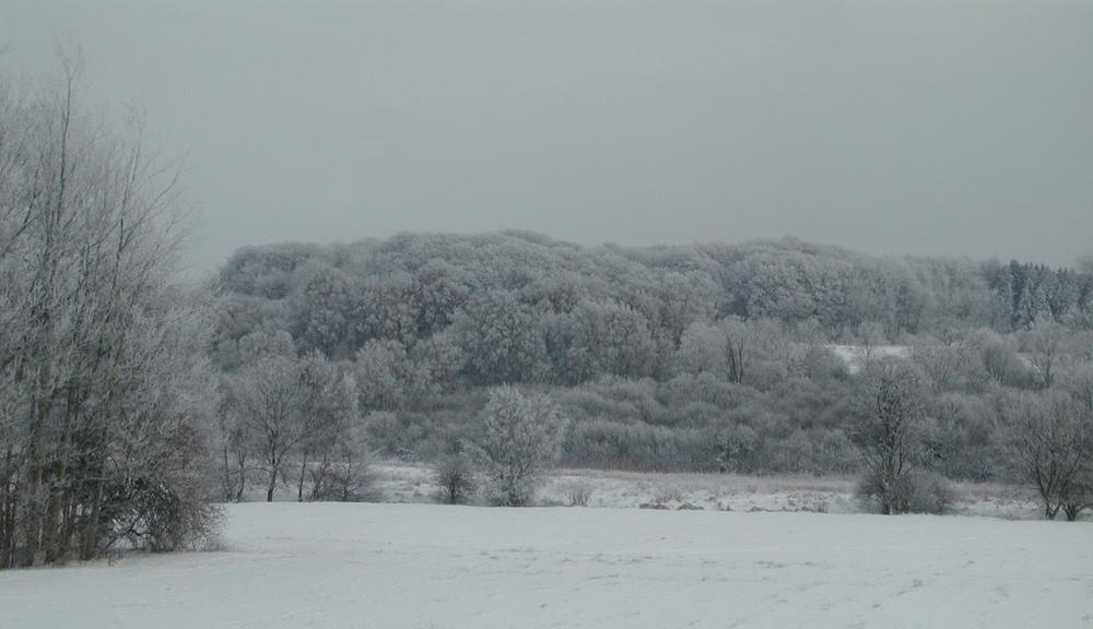 Og vinteren på engen kan også være stemningsfuld. Foto: AOB