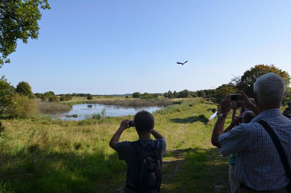 Netop da gruppen nåede frem til søen kaldet 'Frederiks Sund' lettede en fiskehejre fra området. Foto: AOB