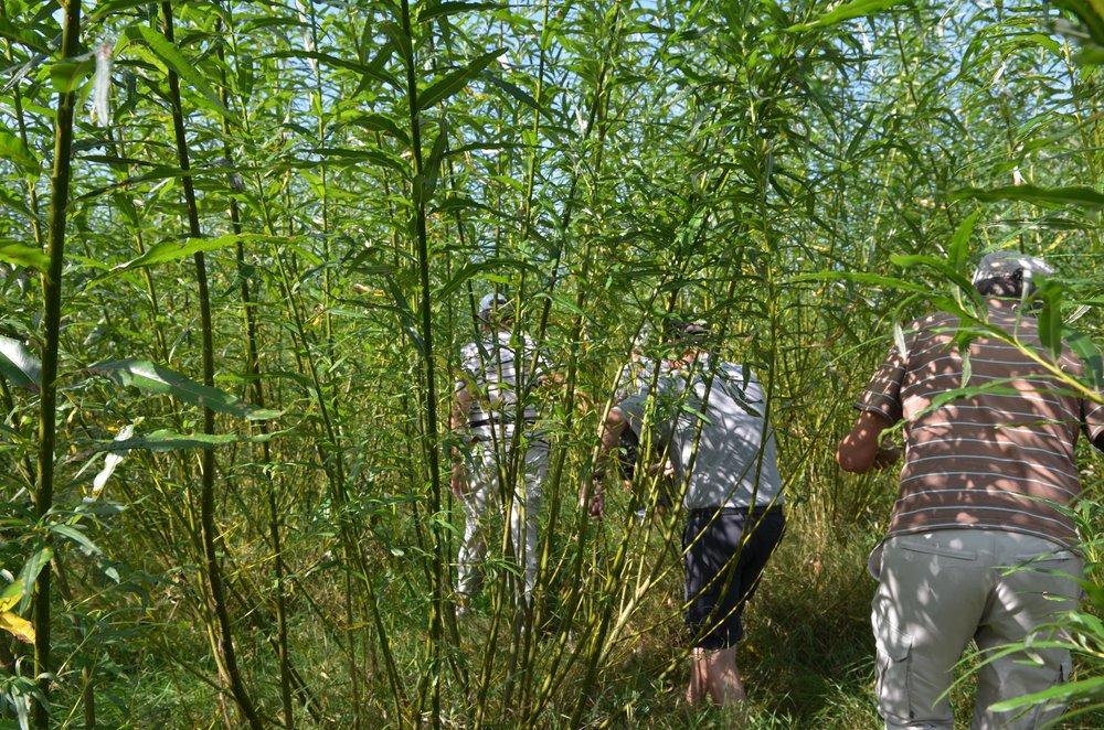 Der var flere deltagere, som 'testede' den tætte pileskov, som man meget let kunne gå vild i. Foto: AOB
