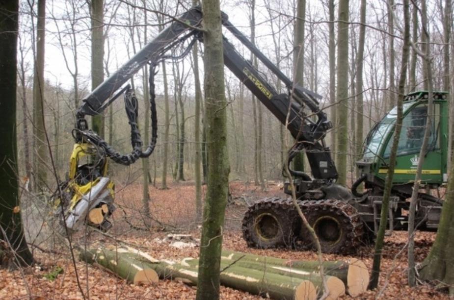 Skovningen vil starte vest for Kongevejen og vil blive udført som håndskovning. Foto: Naturstyrelsen