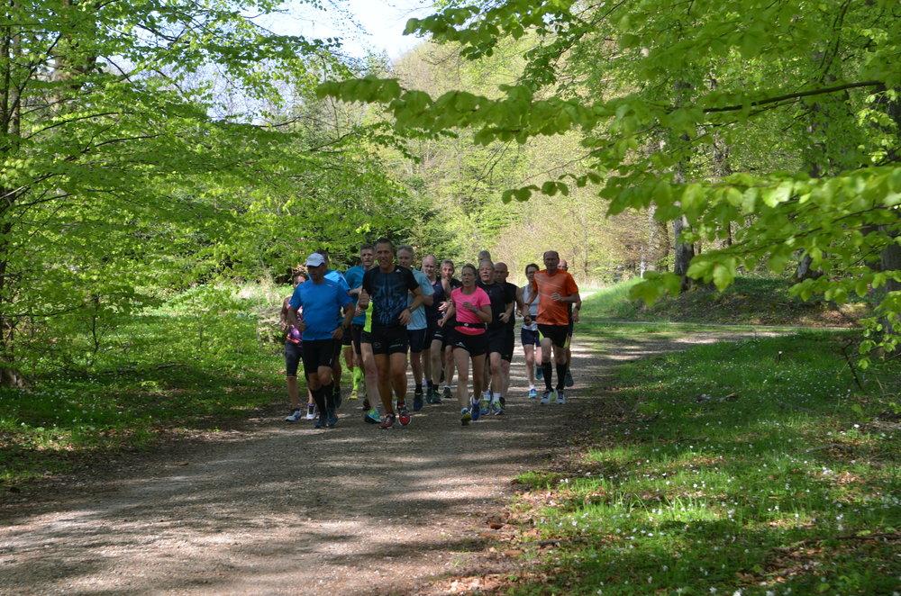 Omkring 150 personer i alle aldre startede en ny livsstil ved at tilmelde sig Blovstrød Løvernes løbetræning for begyndere. Arkivfoto: AOB