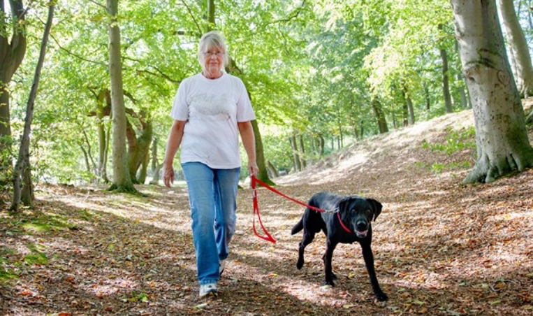 Mange hundeejere er slet ikke klar over, at man skal have sin hund i snor i naturen - det kan koste en bøde, hvis man ikke overholder dette forbud, og fra 1. maj skærper Naturstyrelsen tilsynet med hundeejerne.