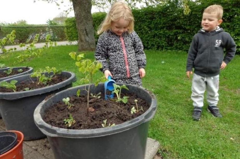 Rundt om træerne er Silje og Lucas netop blevet færdige med at plante jordbærplanter.