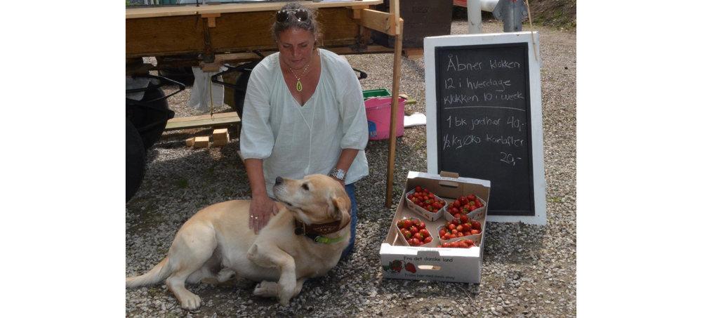 """""""Hunden 'Tebby' er altid med - den er nemligt mit logo, som               alle mine faste kunder kender og ved, at det er kvalitetsvarer               jeg sælger,"""" siger Sussi Øder. Foto: AOB"""