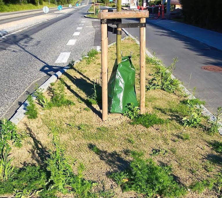 """""""Det kunne være interessant at kende årsagen til, at kommunen vælger at plante en ukrudtsmark på Kongevejen."""" Tekst og foto: Erling Jebe."""