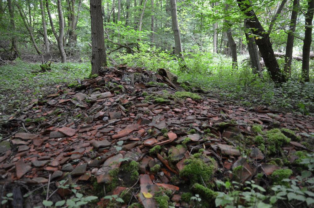 Det er meget rammende, at den lille skov hedder 'Teglskoven',for i en del af området ligger der bl.a. teglaffald fra de omkringliggende teglværker, der benyttede skoven som affaldsplads. Foto: AOB