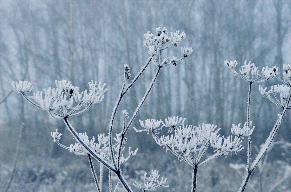 I nat var der ned til 5 graders frost, hvilket gav de smukkeste billeder i morges. Foto: AOB
