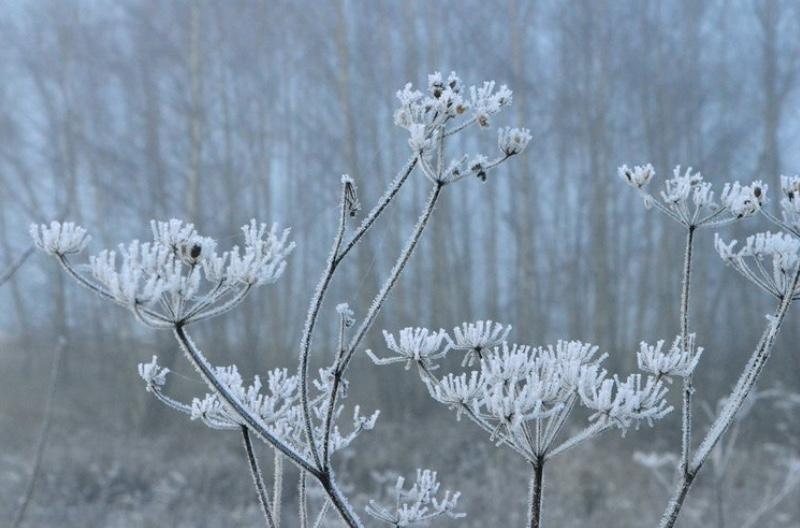Der var minus tre grader tidligt i morges.