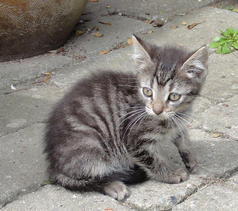 """Dette foto er ikke et billede af den fremlyste kat, men et temafoto. Brumbassen skriver: """"Stribet stor killing/ungkat vil gerne hjem. Hvem savner den kælne kat, som er til gene i Brumbassen?""""."""