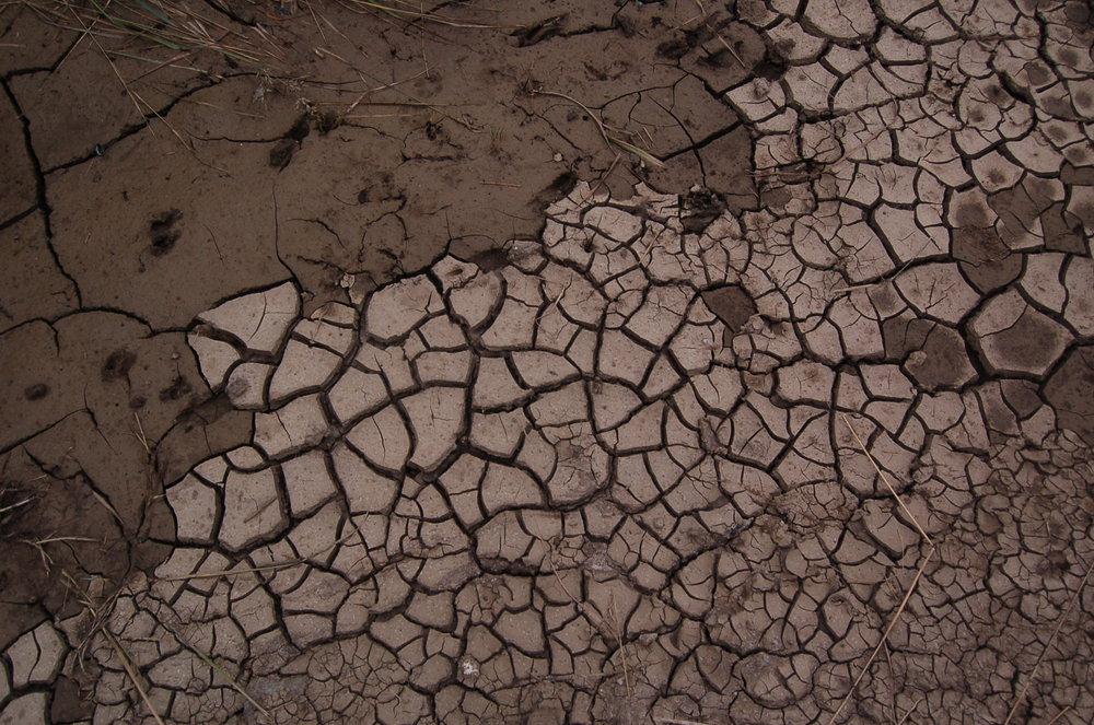 Det er efterhånden svært at huske, hvornår vi sidst har fået et ordentligt regnskyl . Nogle steder er små søer helt udtørret og er blevet til krakelerede tørre lerflager.Foto: AOB