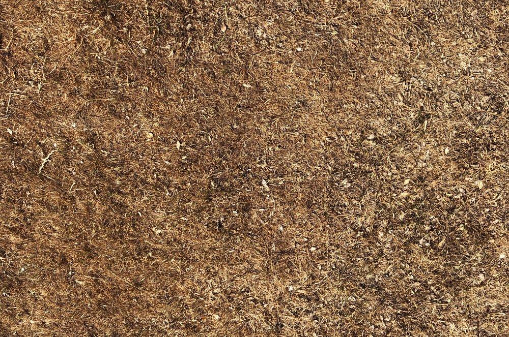 Mange grønne græsplæner er faktisk blevet til en stor indtørret, brun 'måtte'. Foto: AOB