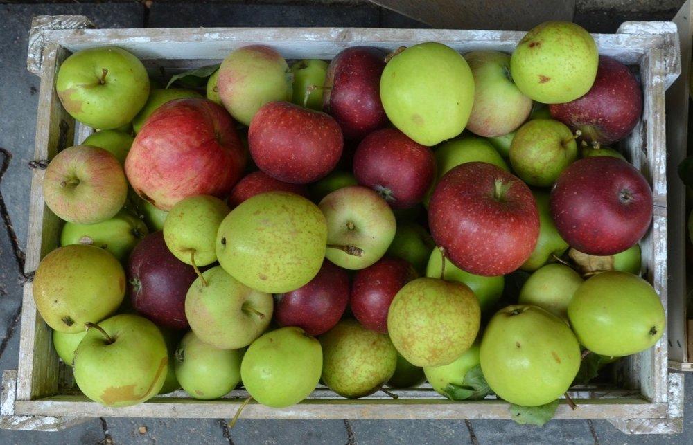 Der bliver bl.a. mulighed for selv at presse æbler til most. Foto: AOB