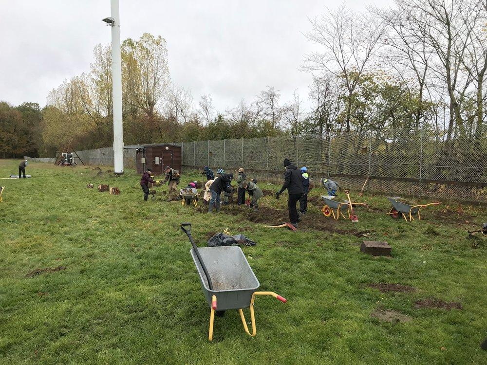 Græsset fjernes, der hvor træerne skal stå, ved hjælp af mange frivillige. Foto:   Michael Degn Timm