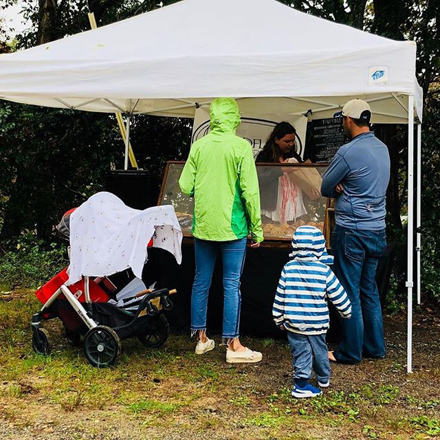 It's a good morning to stop by the Farmers Market! We're here til noon...rain or shine, a mighty group of vendors on this drizzly morning .  Come on down! We've got music by Fred Magee, hot coffee, tea, pastries, quiche, frittata and more for tasty eats. You'll also find: eggs, cheese,  melons, eggplant, peppers, greens, cucumbers, potatoes, tomatoes, squash, herbs, juice, corn, honey, fresh cut flowers, handmade baskets and bags, and much more .... #buyfreshbuylocal #getfreshwithafarmer @wellfleetfarmersmarket  @capecodorganicfarm  @daves_greens  #davidlight #donovandesignscapecod  #downhomefarmcapecod @pirate_yoga  #GoodGracesBaskets  #monopati #narrowlandfarm #nestwoodfarm  aka #murphthesurf  @thecaptainsdaughters  #wellfleetchickkoop @wildflour_bakery