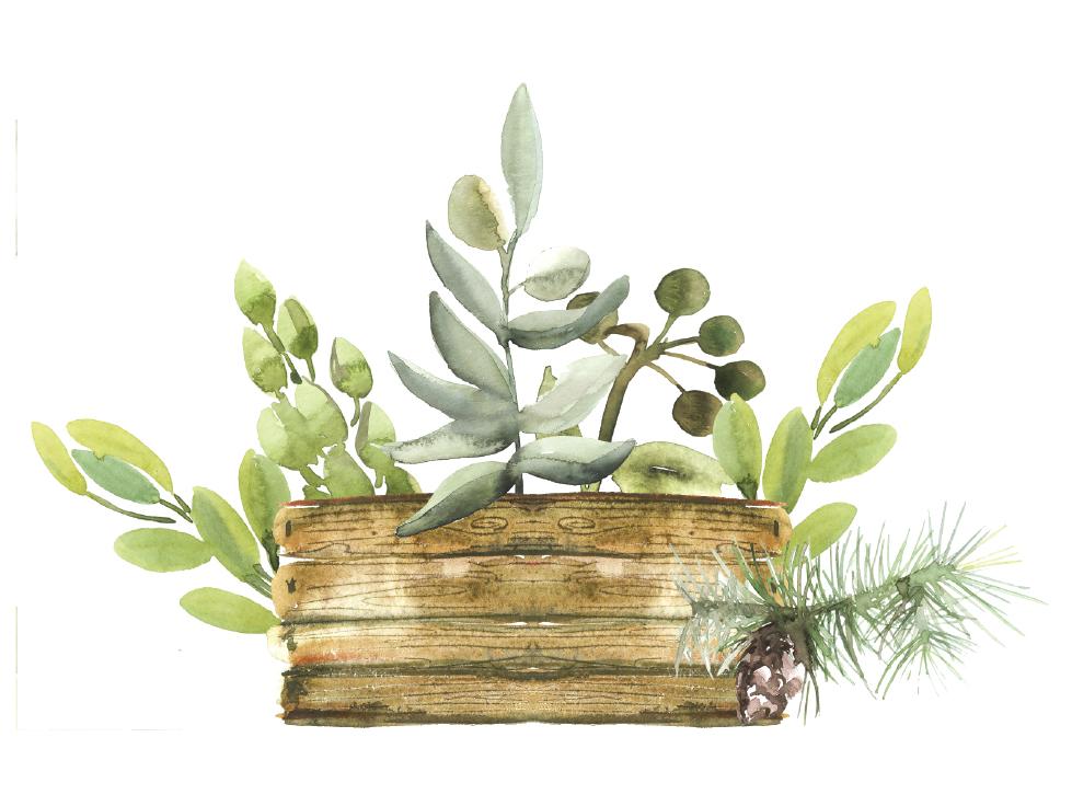 succulent-pot.jpg