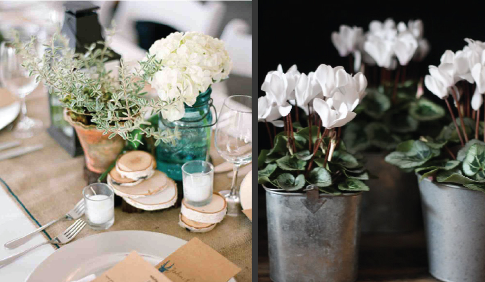 Left image via Martha Stewart | Right image via Gardening Know How