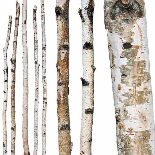 birch-branches.jpg
