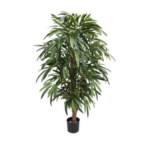 ficus-longifolia.jpg