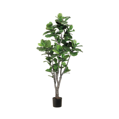 fiddle-leaf-fig-tree.jpg