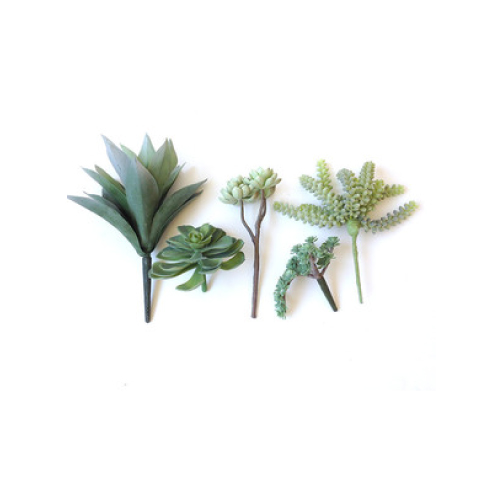succulent-stems.jpg