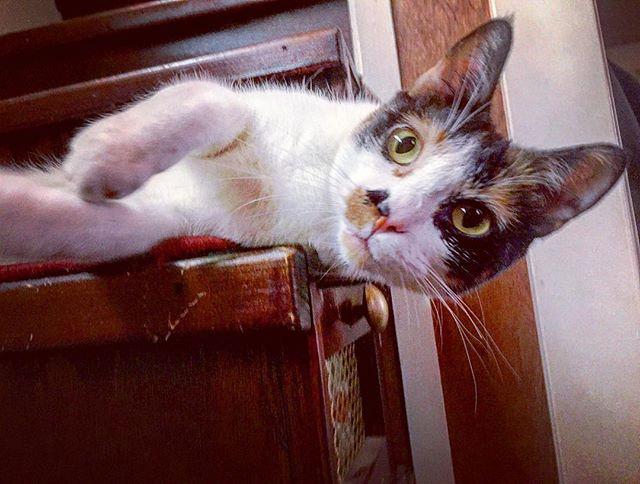 Happy #caturday from this sweet little #kitten face, Persia. 🐱💓 #catsofinstagram #cats_of_instagram #instacat #catstagram #prettykitty #rescuecat #rescuecatsofinstagram #adopt #adoptdontshop #catlife #humanesocietyofbouldervalley #boulderhumanesociety #hsbv #boulder #bouldercolorado #boulderlife #coloradocats #catsofcolorado #coloradogram #tinylife #tinyhouse #pupcultureboulder