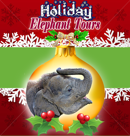 EAF Asian Elephants want to wish you a Happy Holiday! - All guests will enjoy hot cocoa and Christmas cookies, served by Mrs. Claus herself. Guest can take advantage of bending Santa's ear to share with him their wish list.