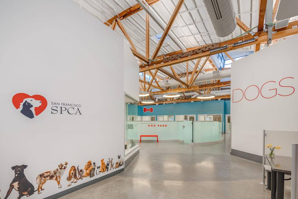 SPCA SF - 005.jpg