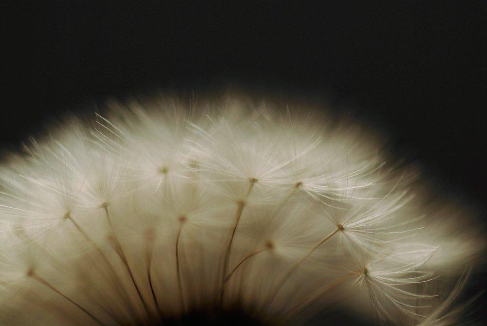 Copyright_Leah_Hedberg_[20121010__DSC0063]_web.jpg