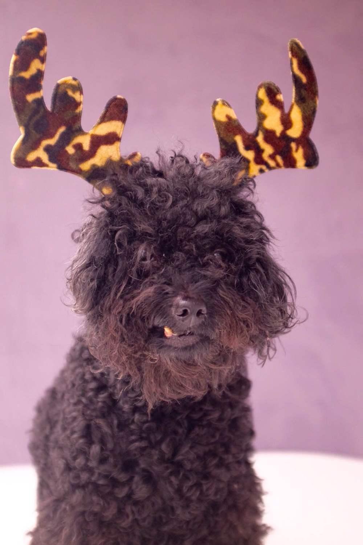 i wish you a furry christmas scott p yates photography - Furry Christmas