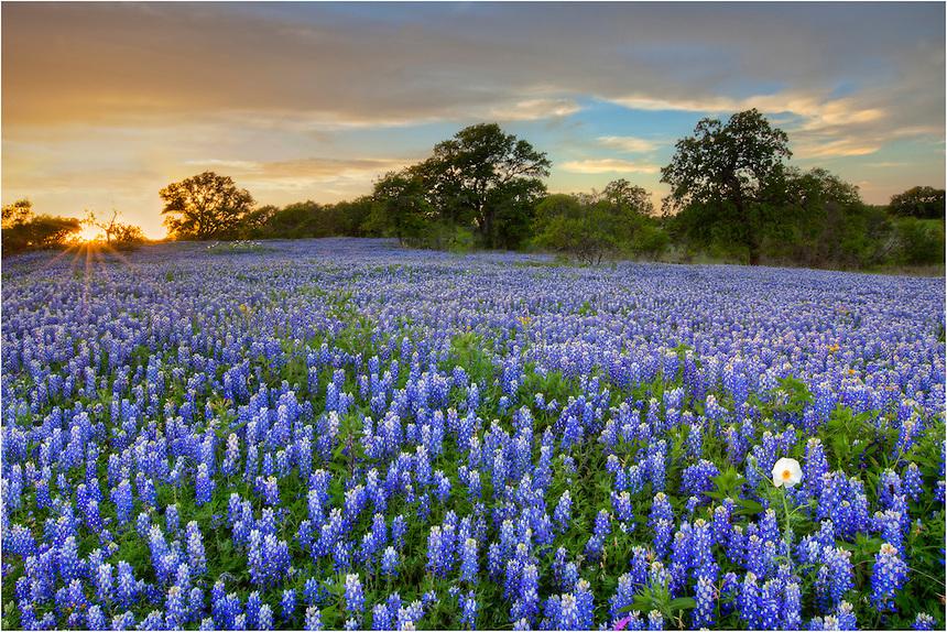 Texas-Bluebonnets-in-San-Saba-County-Spring-Evening-4.jpg