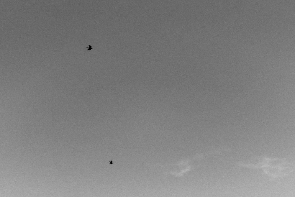 amanda+dave-alyssasorenson-271.jpg