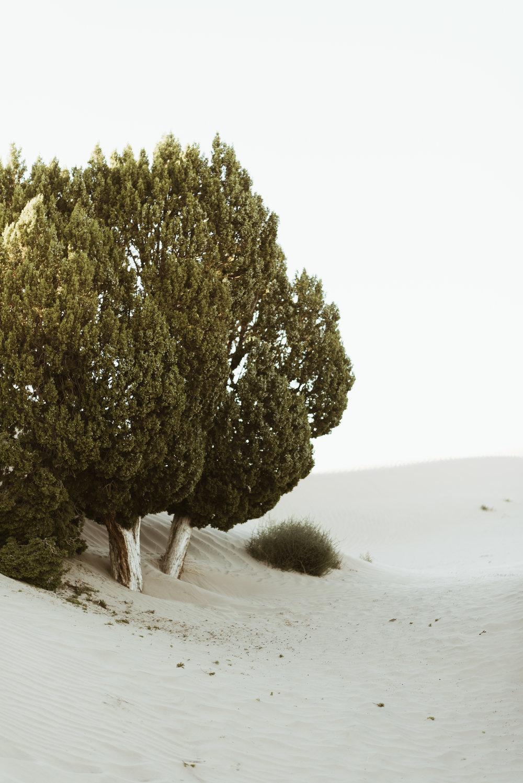 alyssasorenson-elm-31.jpg